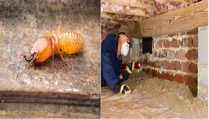 Annual Termite Inspections