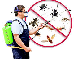 Pest Inspections services