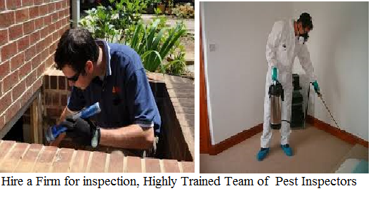 Termite Inspection services