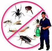Pest Inspection treatments