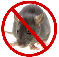 Rodent Control and Treatment